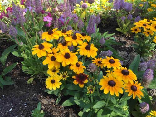 VA-garden-planter_web