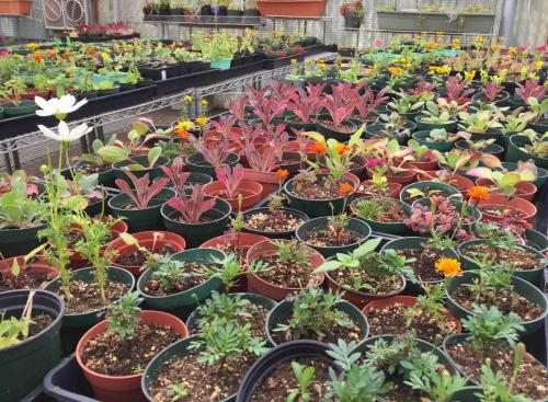 VA-greenhouse-web